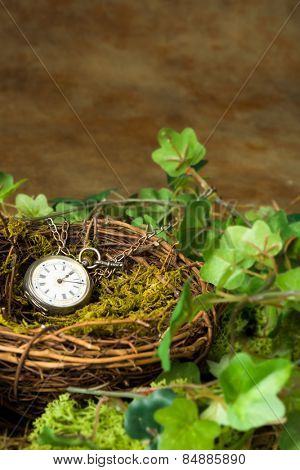 Antique pocket watch lying in an abandoned bird's nest