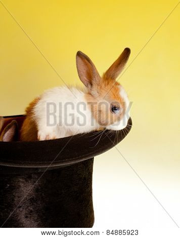 Black magician's top hat with one bunny rabbit coming out