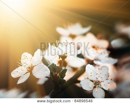 Spring Flowers Blossom In Sunny Day