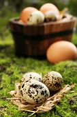 image of grass bird  - Bird eggs in wooden bucket on green grass background - JPG