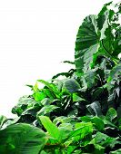picture of jungle  - Jungle plants background on a white background - JPG
