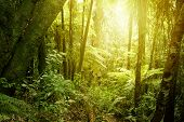 picture of jungle  - Sunlight shining in tropical jungle - JPG