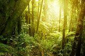 pic of jungle  - Sunlight shining in tropical jungle - JPG