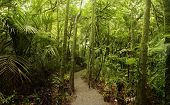 picture of humidity  - Walking trail in tropical forest - JPG