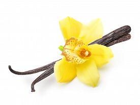image of vanilla  - Vanilla pods and orchid flower isolated on white background - JPG