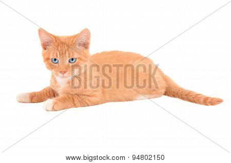 Angry Orange Kitten