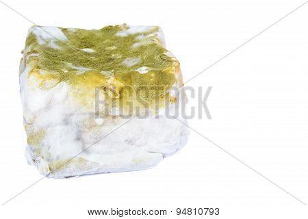 Bread Moldy