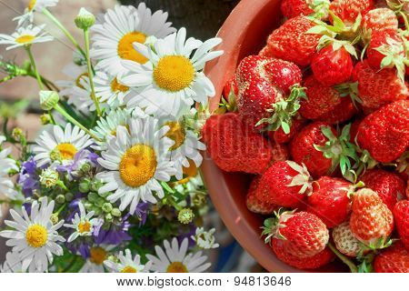 Chamomile Flowers And Berries Ripe Strawberries