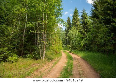 The road in the wood