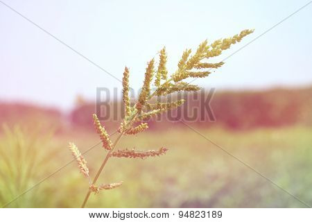 Flower grass in soft retro style for Abstract background.