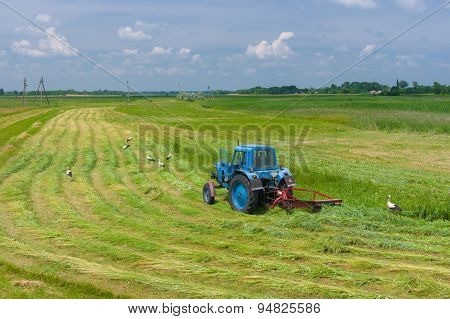 Mowing hay with stork inspection on a water-meadow