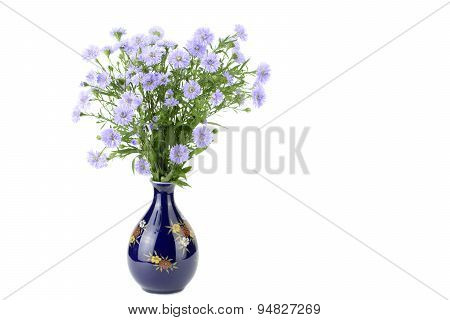 Perennial aster in a vase