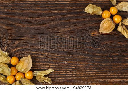Physalis Background With Copy space.