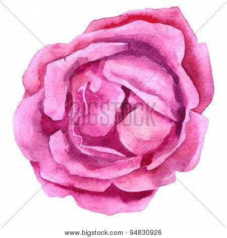 watercolor drawing pink rose