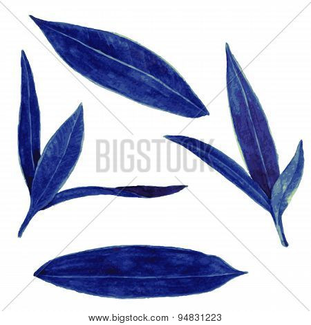 set of abstract leaves in watercolor