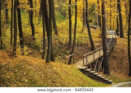 Autumn sunny park