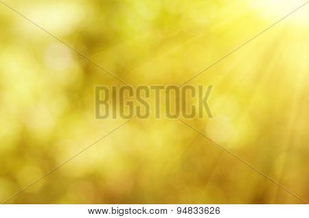 Natural autumn  bokeh
