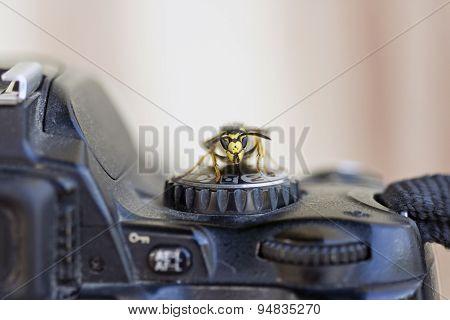 Wasp on a digital camera controls