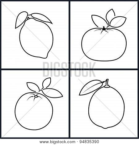 Orange,Lemon,Mandarin,Lime