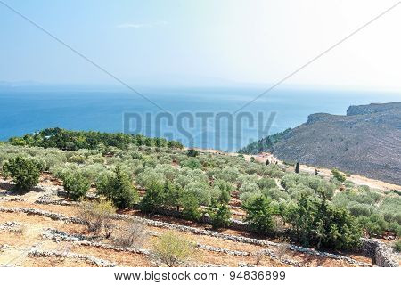 Olive trees and Mediterranean villa on Greek Kalymnos island