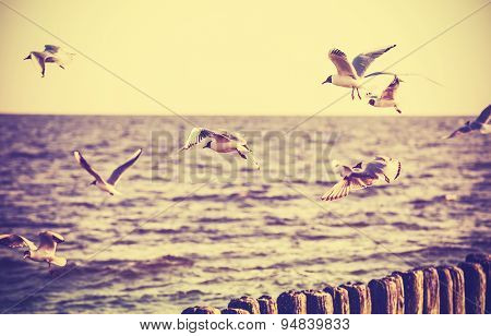 Vintage Retro Stylized Photo Of Birds On The Sea.