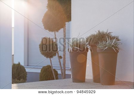 Flowerpots Outside The House