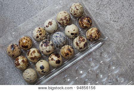 Eggs Of Quail In The Plastic Box