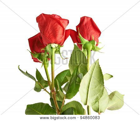 Three red roses composition