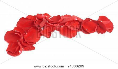Red rose petals composition