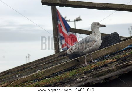 Seagull standing on wooden roof