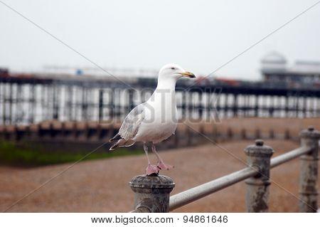 Seagull standing on metal bar