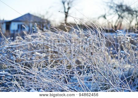 Frosted wild plants against the landscape