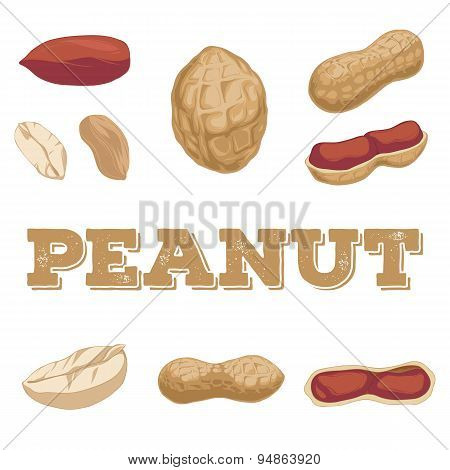 Peanut Set.hand Drawn Peanuts.