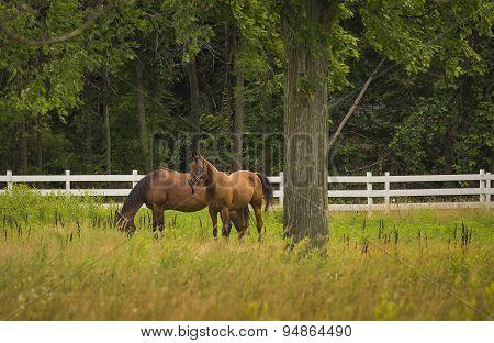 Horses Grazing On Farm