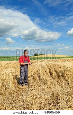 Agricultural Scene, Farmer Or Agronomist Inspect Damaged Wheat Field