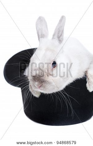 Rabbit In Magic Hat