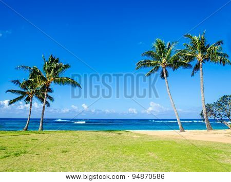 Cococnut Palm Trees On The Sandy Poipu Beach In Hawaii