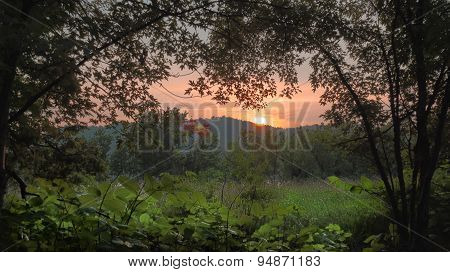 Orange and Pink Sunset or Sunrise with Maple Trees, Watercress.