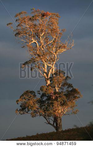 Sun Sets on Lone Tree