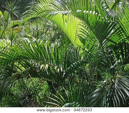 Dense Tropical Foliage