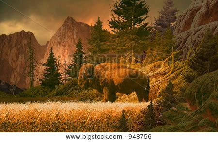 Buffalo In The Rocky Mountains