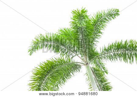 Under Palm Tree On The White Background