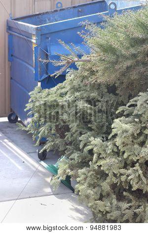 Dry Christmas Trees