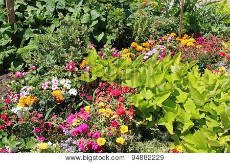 Flowers And Vegetable Garden