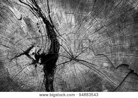 Circles Of A Cut Tree Trunk