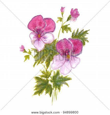 Bush garden pink pansies