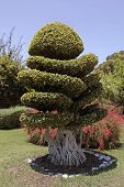 picture of bonsai  - Beautiful natural bonsai tree in the garden - JPG
