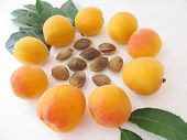 image of apricot  - Apricots in a circle with apricot kernels in the middle - JPG