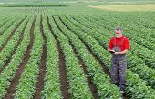 pic of soybeans  - Farmer or agronomist examine soybean plant in field using tablet - JPG