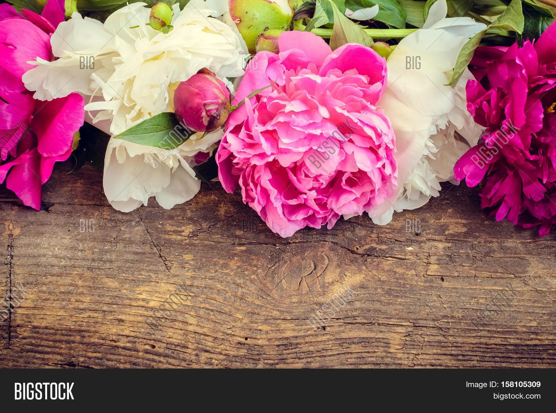 peony background fuchsia pink image amp photo bigstock